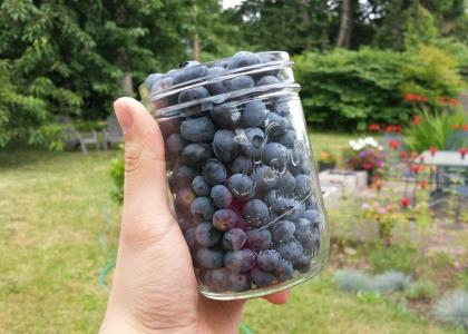 A jar of blueberries